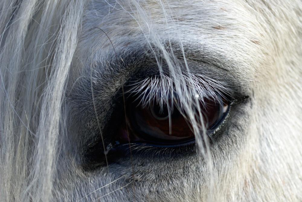 Koně 2015