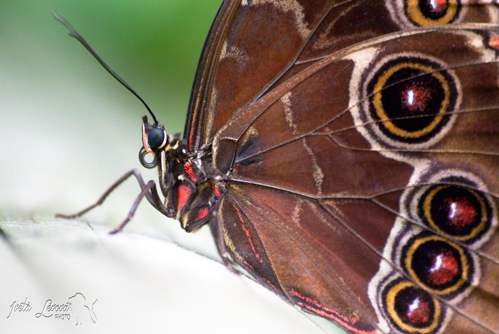 Motýli v Botanické zahradě, 14.4.2016