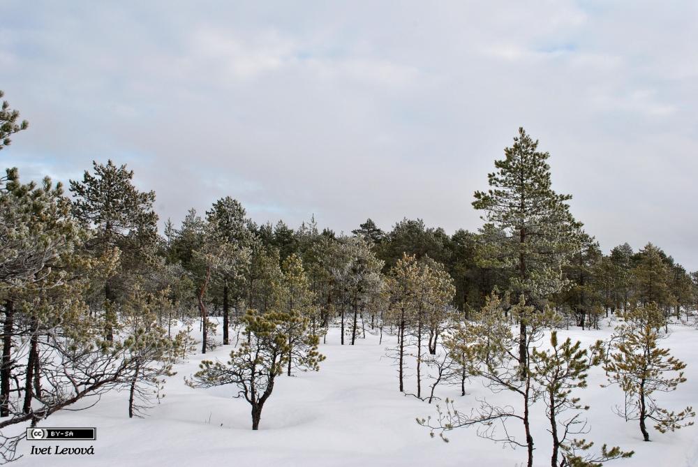 Výlet do středního Estonska, 1. – 3. 2. 2013